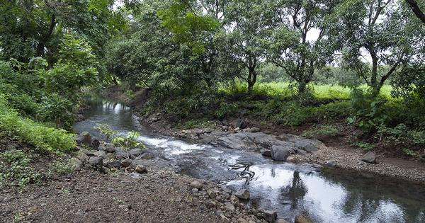 Indian government wants to disband the protector of ecologically-sensitive Dahanu