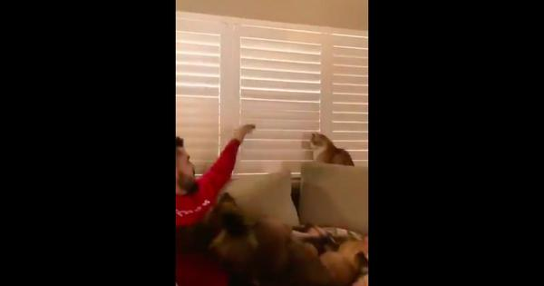 Watch: This is what happens when a cat doesn't care what its owner wants