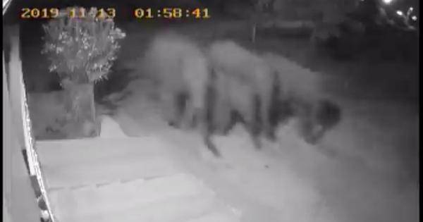 Watch: Family of elephants strolls into a Tamil Nadu residential area