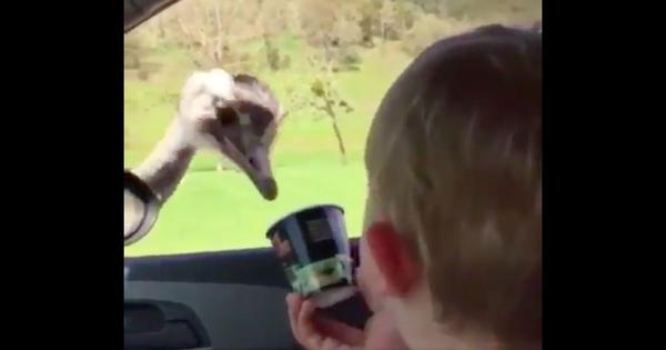 Watch: This baby's uncontrollable laughter while feeding an ostrich is utterly infectious