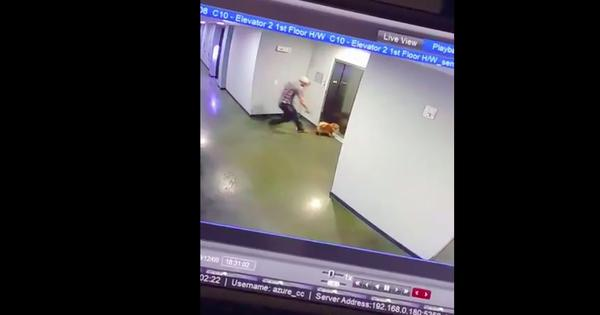 Watch the dramatic moment a dog got his leash stuck in an elevator – but was swiftly rescued