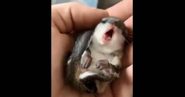 Watch: This baby squirrel's yawn is one of nature's gifts to online videos