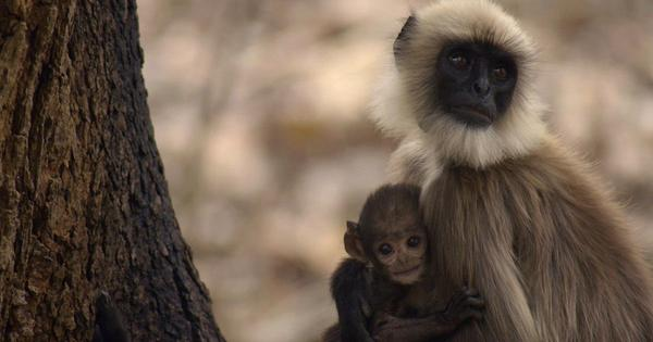 In documentary 'Wild Karnataka', a rich portrait of creatures great and small