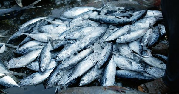 Eco India, Episode 56: How conscious choices made by consumers could protect both fish and fishermen