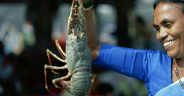 Eco India: A monthly calendar that helps seafood consumers understand when to eat which fish species