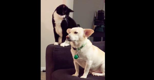 Watch: After a long, hard think, this cat took a daring swipe at a dog