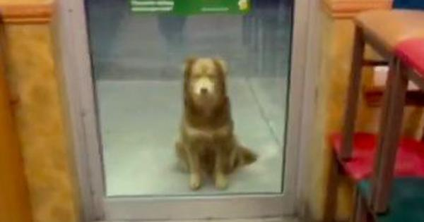 Watch: This adorable stray dog diligently visits a fast food outlet every night for a meal