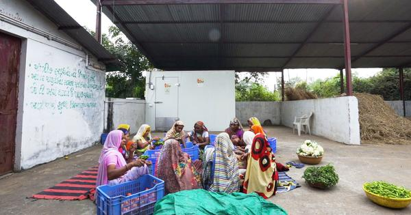 Eco India: A low-cost cold storage facility that could help marginal farmers make big profits
