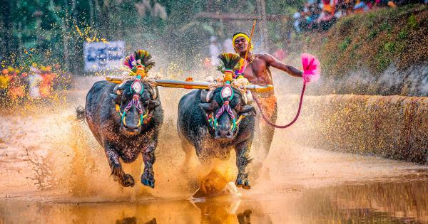 A Kambala race and Usain Bolt comparisons: Why talent scouting via social media is problematic