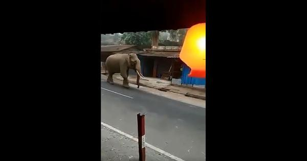 Coronavirus lockdown: Elephant roams freely on the streets near Wayanad in Kerala