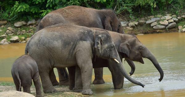 Assam: Drivers suspended after train runs over elephant, one-year-old calf; engine seized