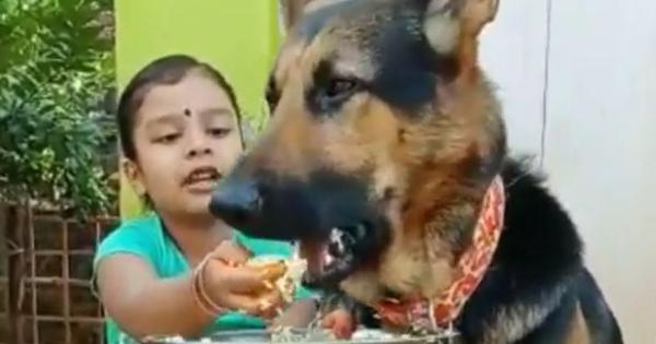 Watch: Little girl feeds German Shepherd much larger than her with aplomb