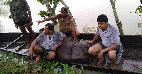 Assam floods: Toll rises to 59 with nine more deaths, 95% of Kaziranga National Park under water