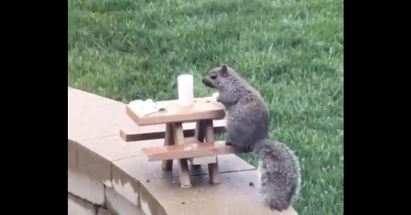 Watch: This elegant miniature 'private dining room' was set up for a squirrel outdoors