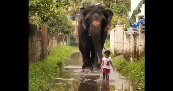 Watch: A two-year-old girl is the tiny best friend of an old female elephant in Kerala