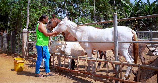 Eco India, Episode 88: How volunteers and activists are nursing distressed animals back to health
