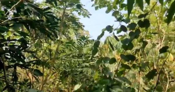 Watch: A glimpse of a new Miyawaki forest near Narayan Pujari Nagar in Mumbai