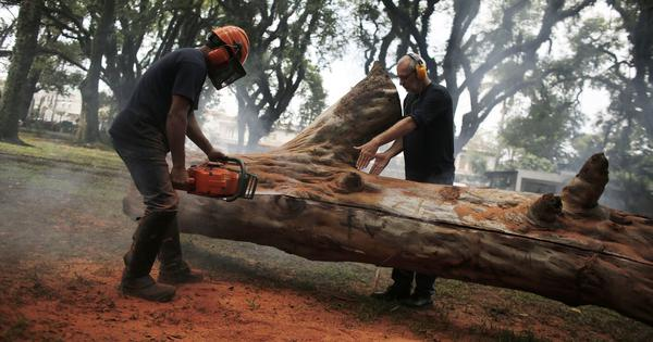 In just 14 years, the world has lost forest land more than twice the size of Karnataka