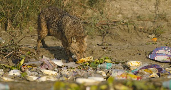 Photo essay: India's precious wildlife is drowning and dying in our filth