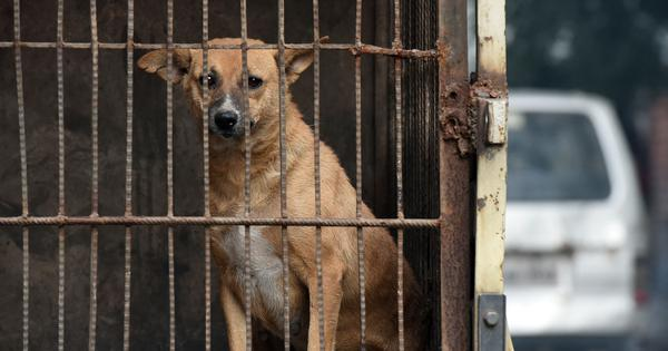 Despite a history of violence against animals, India does not have a formal record of this cruelty