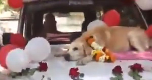 Watch: Spike the sniffer dog receives a grand farewell from Nashik Police