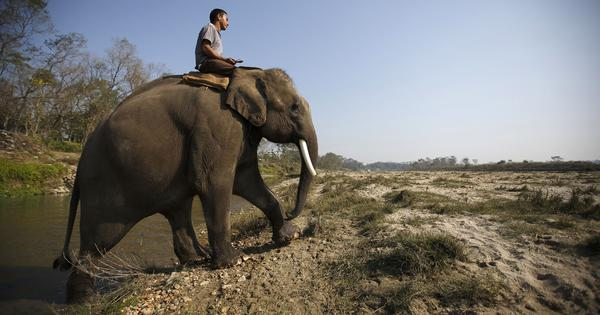 Amid Covid-19 tourism slump, Nepal's elephant ride operators are selling their animals to India