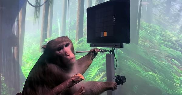 Watch: Monkey plays video games with their mind, showcased by Elon Musk-founded Neuralink