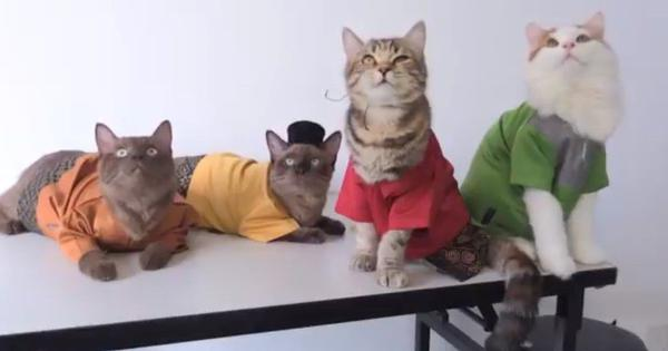 Watch: Cat parents dress their pets in traditional Malaysian outfits for Eid holidays