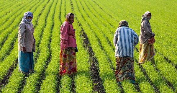 Why female farm workers' nutrition levels drop during peak agricultural seasons