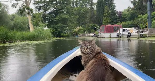 Watch: Louis the cat goes for a kayak ride in the rain