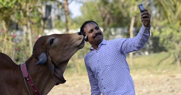 Cow protection was a sensitive subject in India even when the Constitution was being framed