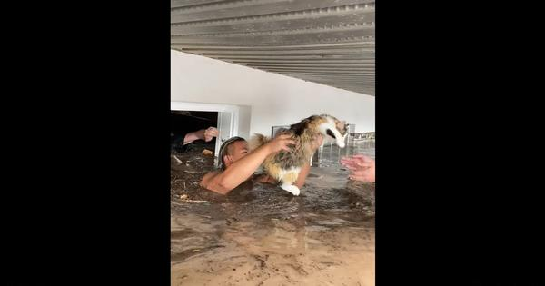 Watch: How this cat was rescued from a flooded basement apartment in Cedar City, Utah, US
