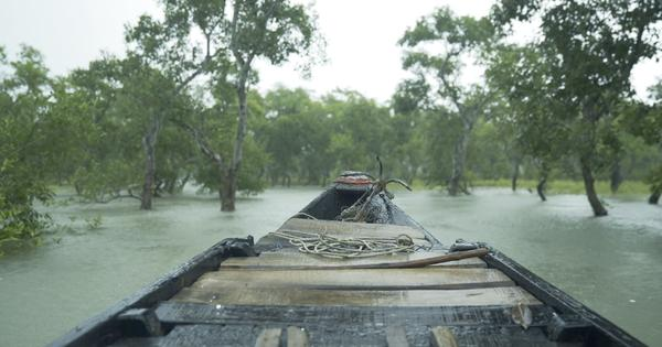 Eco India: To reduce excess dependency on the Sundarbans, locals promote alternative livelihoods