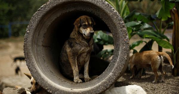 Karnataka: Case filed against gram panchayat after dozens of stray dogs found dead