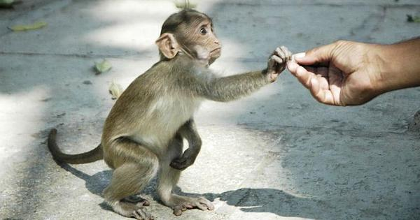 Social distancing is not a new phenomenon. Ants, monkeys and bats have been doing it for ages