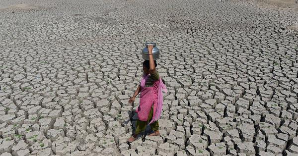 India is 'planting forests' to forestall the impending water crisis. It is a fool's errand
