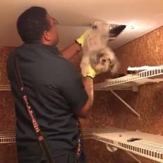 Watch: Firefighters rescued a dog trapped in a ceiling heating vent