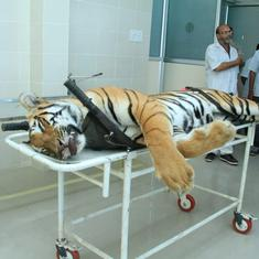 Tigress Avni's killing: Order inquiry if you want, Maharashtra minister tells Maneka Gandhi