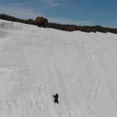 This video of a bear cub climbing a snowy slope is not the wonderful thing it is being hailed as