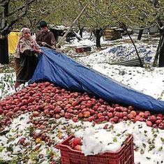 Kashmir's apple growers face devastating losses after sudden snowfall: 'It's a dagger in my heart'