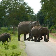 Climate change and loss of habitat will push elephants in subcontinent towards Himalayas: Study