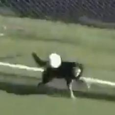 Move over David de Gea: Watch a dog pull off a brilliant save in a league game in Argentina