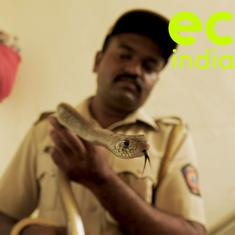 Eco India: This constable with the Mumbai Police is also the city's go-to snake rescuer