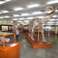 India's invaluable dinosaur fossils lie neglected and forgotten in this Kolkata museum