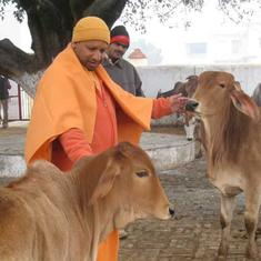 Uttar Pradesh government approves setting up corpus for cow shelters