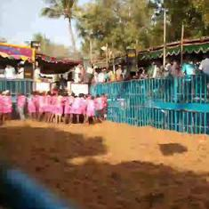 Watch: Jallikattu was back in full flow in Tamil Nadu with events being held across the state