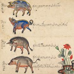 Happy New Year of the Pig! The fascinating story of the Chinese calendar