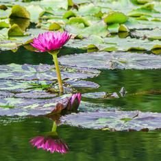 How ponds can fight climate change in your garden
