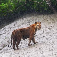 Climate change and reduced freshwater supply have put Sundarbans on the 'endangered' ecosystem list