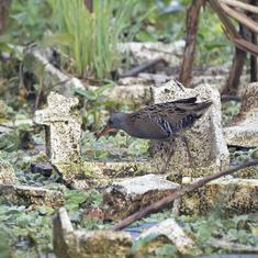 In Mumbai, 'bird races' are highlighting city's avian diversity, whether in wetlands or wastelands